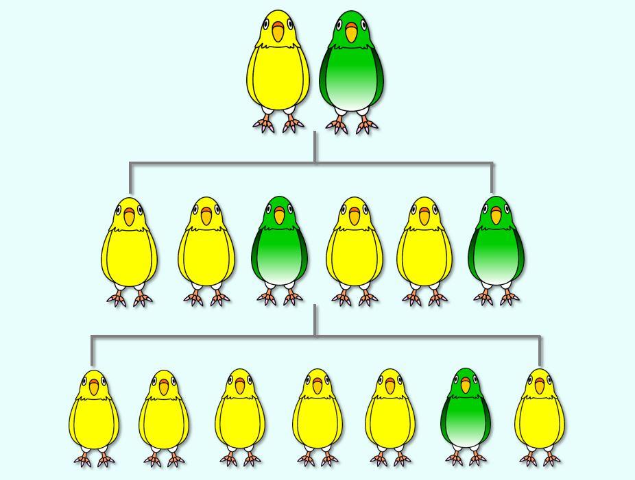 インコの家系図
